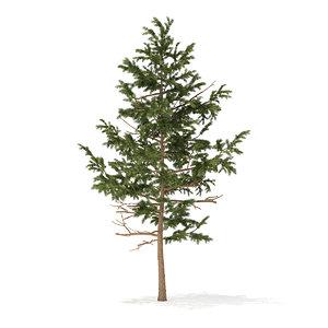 3D pine tree 5 1m model