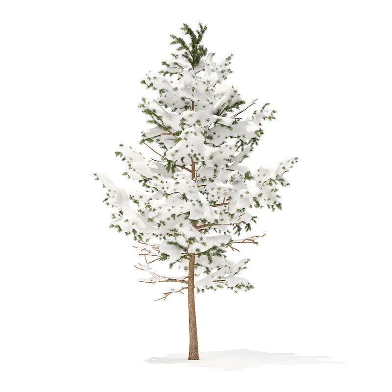 pine tree snow 5 3D model