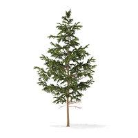 3D pine tree 5 5m