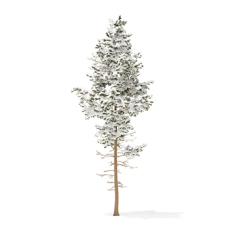 3D pine tree snow 10 model
