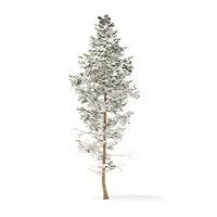 pine tree snow 14m 3D model