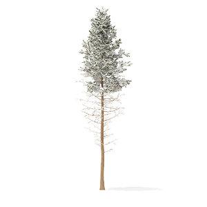 3D pine tree snow 28 model