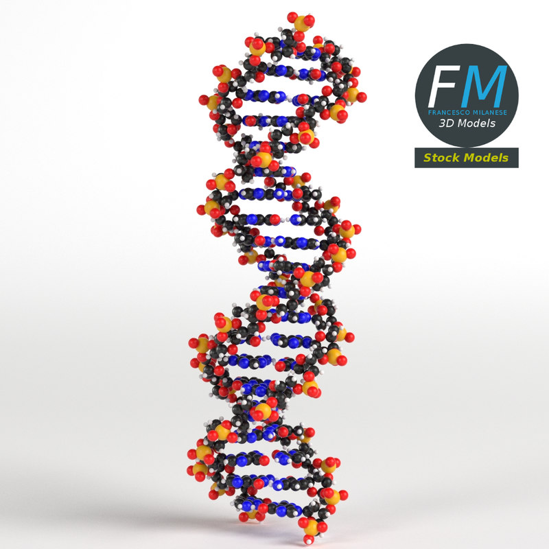 3D dna deoxyribonucleic acid
