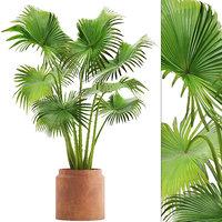 3D palm cly pot model