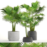 palms pots ferm 3D model