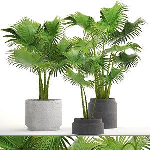 palms pots ferm 3D model