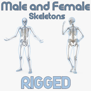 male female bodies skeletons 3D