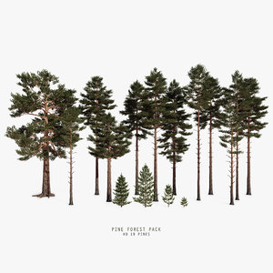 pine forest pack 3D