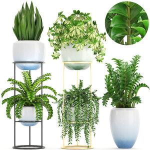 3D plants schefflera arboricola