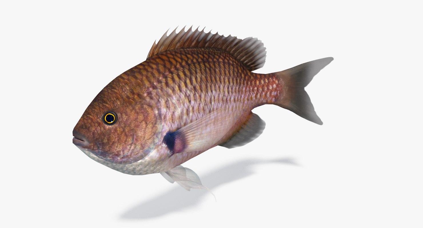 fish damselfish 3D model