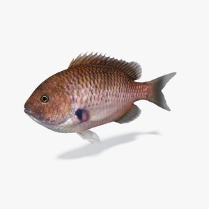 fish damselfish 3D model