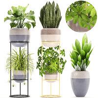 plants sansevieria schefflera 3D model