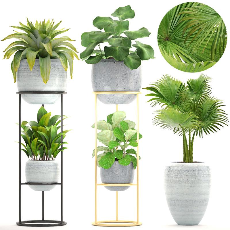 plants bromelia ficus 3D model