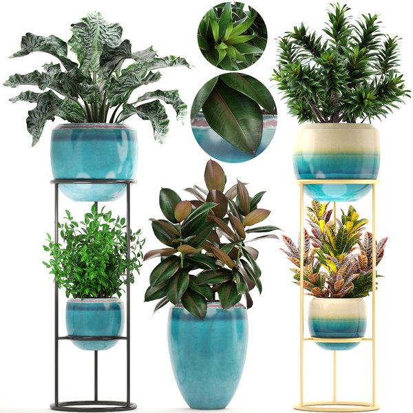 plants croton codiaeum 3D
