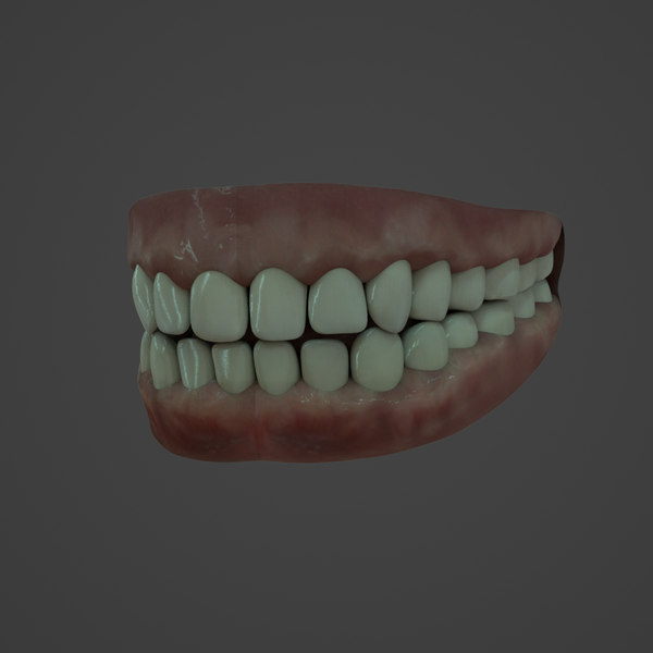 3D realistic human teeth model