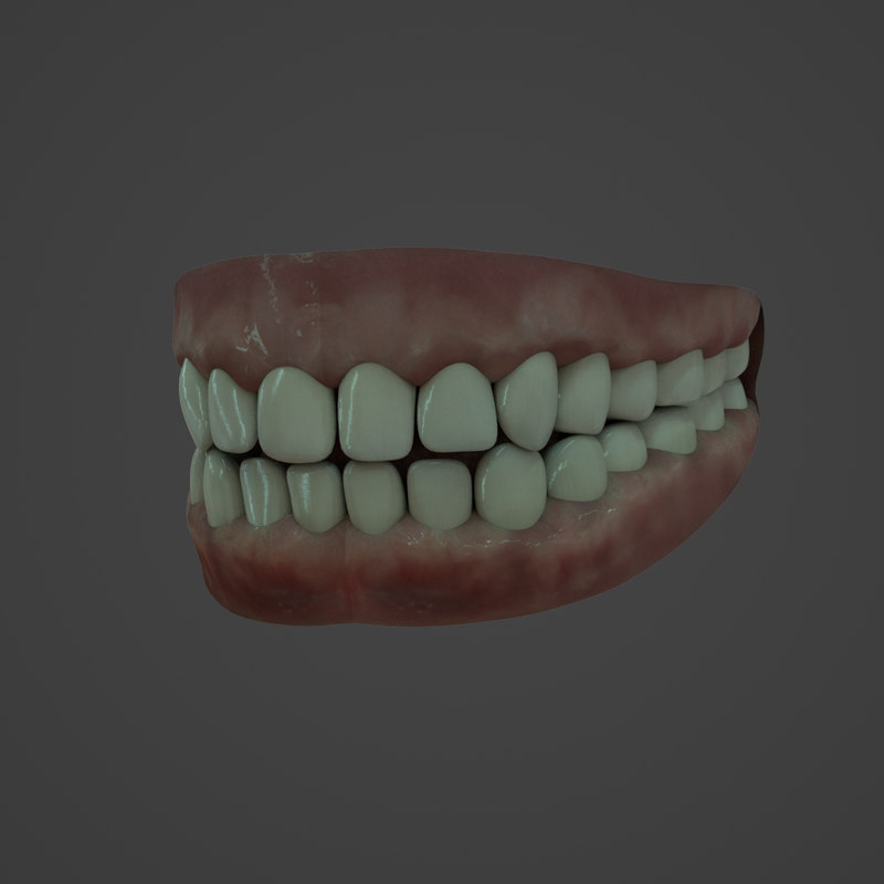 3D realistic human teeth model