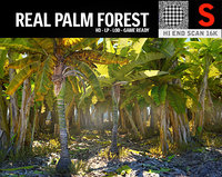 real palm forest hd 3D model