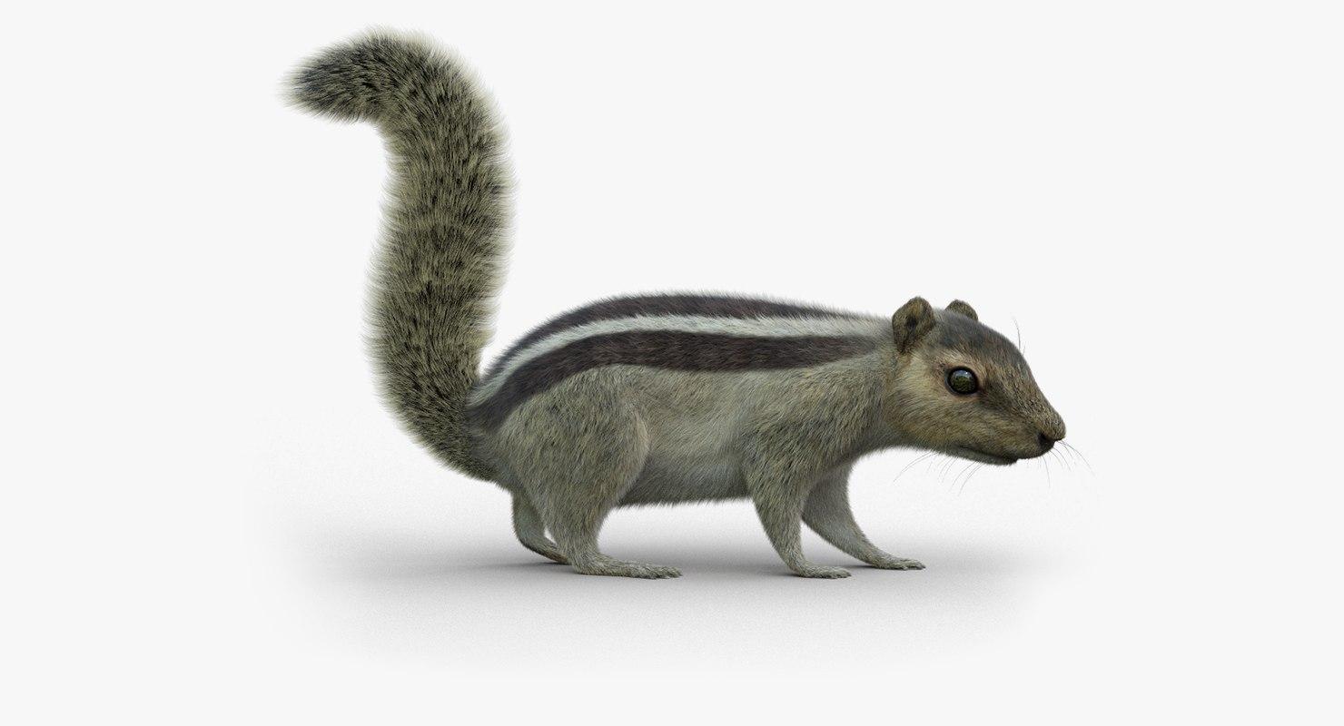 3D squirrel 2 fur rigged model