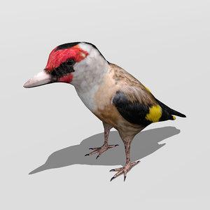 goldfinch bird finch 3D