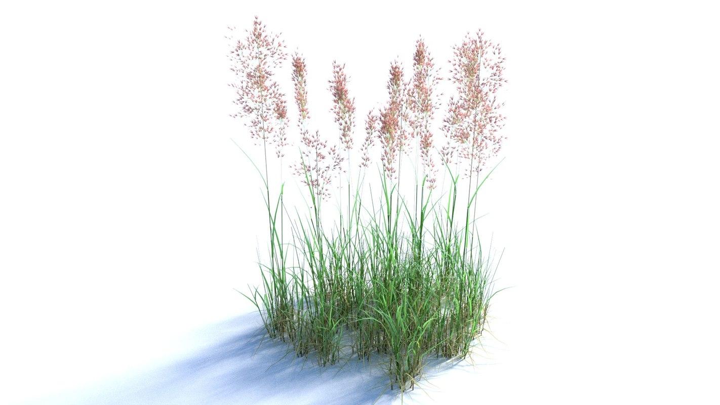 3D bent grass model