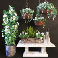 Hanging pot flowers