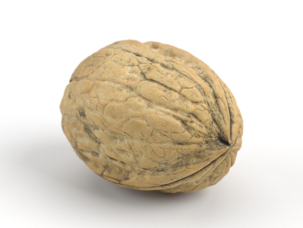 photorealistic walnut 3D model