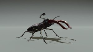 3D stag beetle