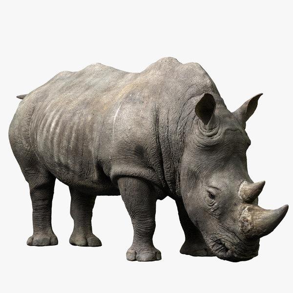 rhino rigged model