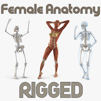 female anatomy rigged 3D model