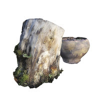 Stump Pot