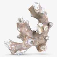 coral model