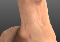 male body anatomy human 3D model