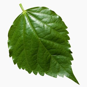 leaf 3D