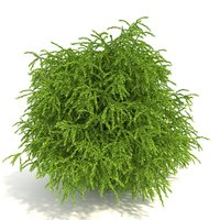 3D cryptomeria model