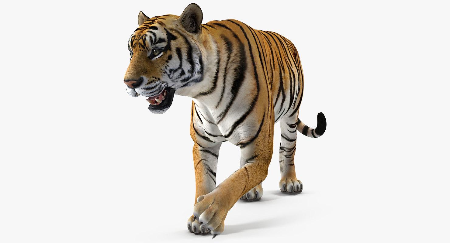 tiger rigged 3D model