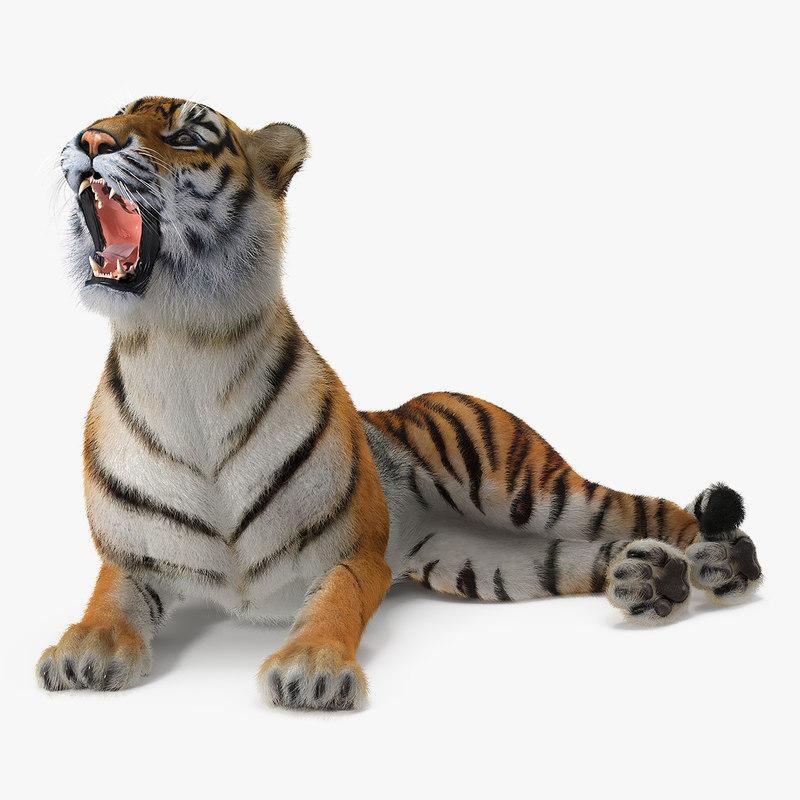 3D tiger rigged fur model