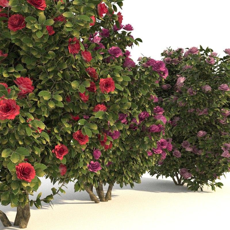 camellia trees modelled 3D model
