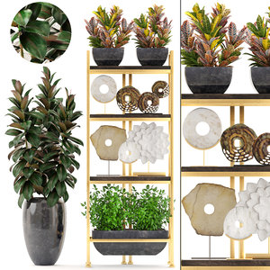 3D model shelf decor tropical plants