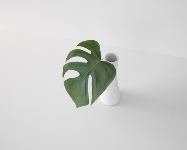 3D monstera leaf