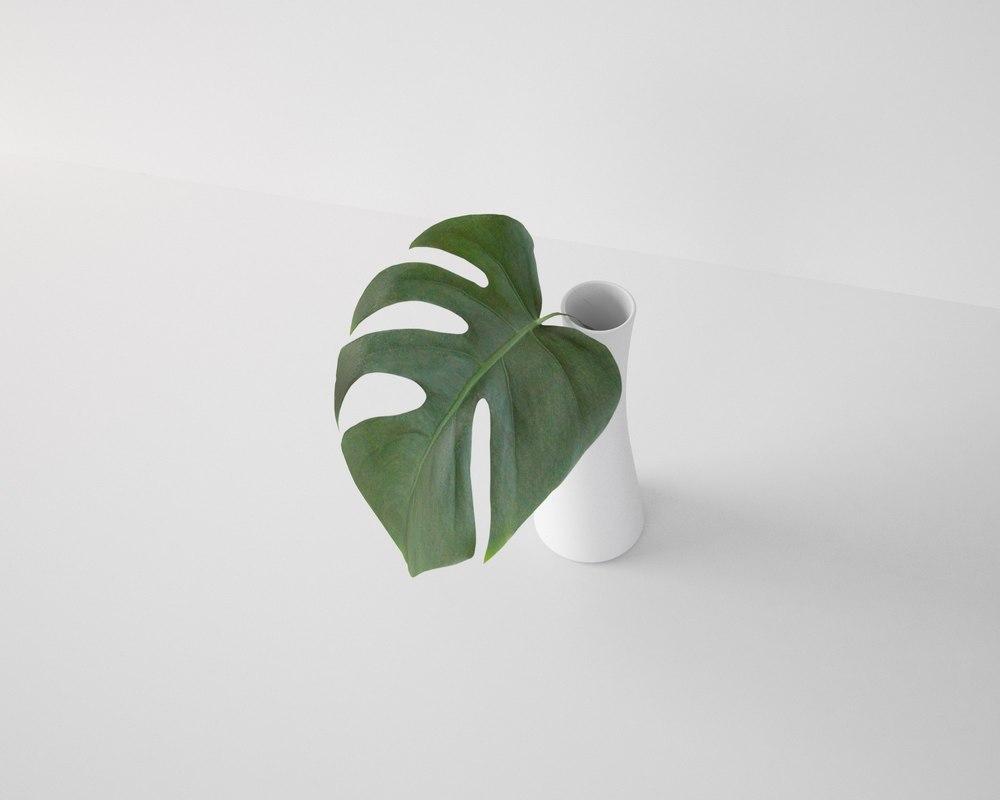 3D monstera leaf