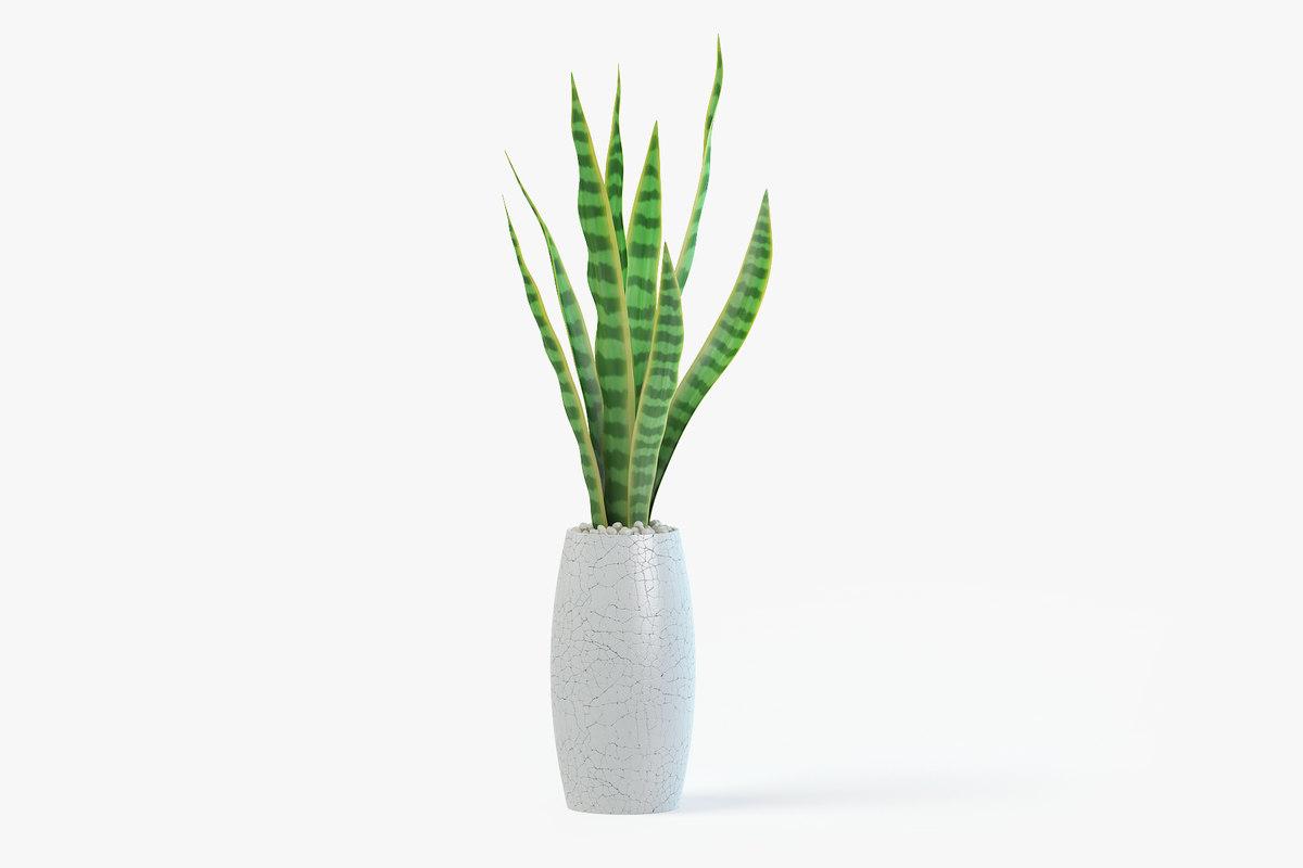 snake plant pot 3D model