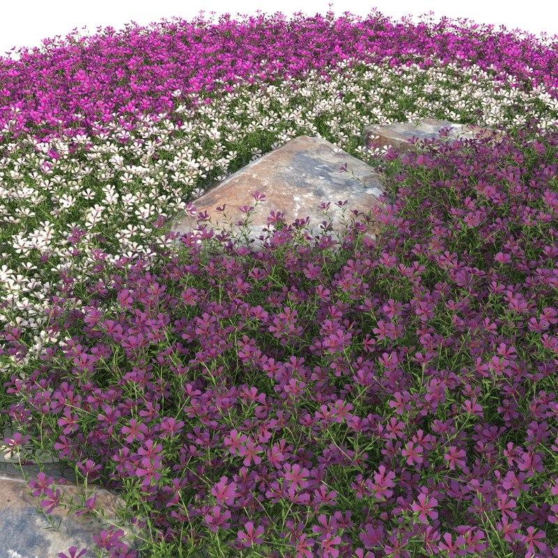 3D phlox modelled flower model