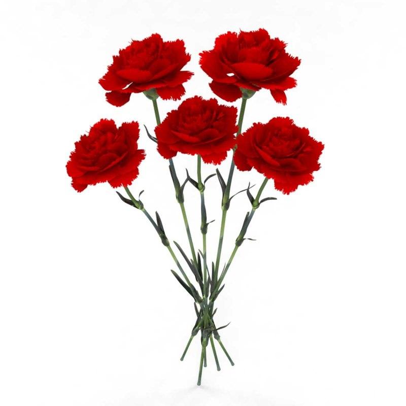 3D carnation red model