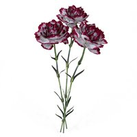 carnation white white-burgundy 3D model