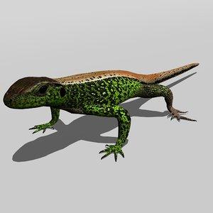 3D sand lizard lacerta agilis model