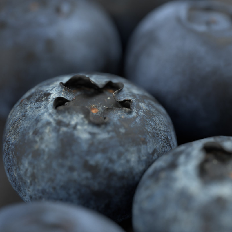 blueberry blue berry 3D model