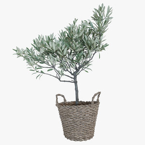 olive tree basket model