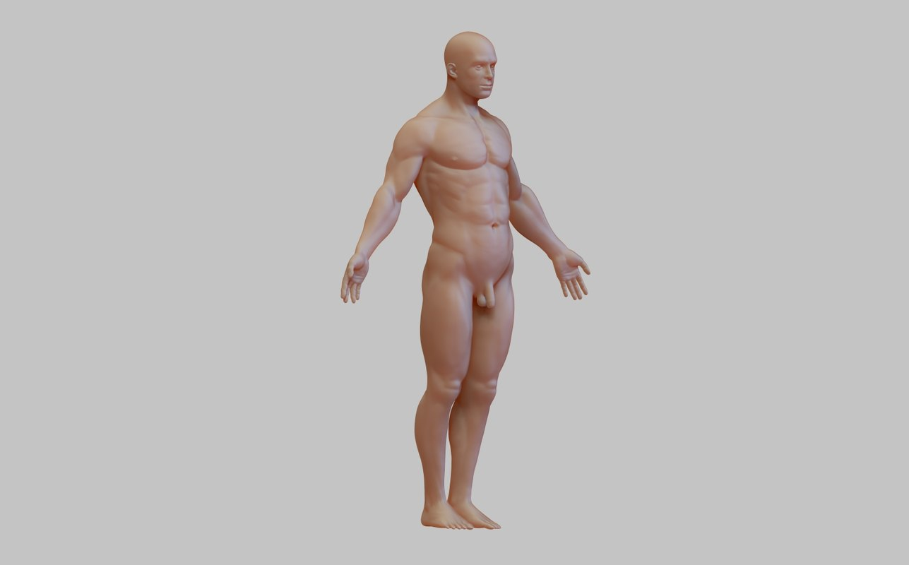 anatomy man 3D model