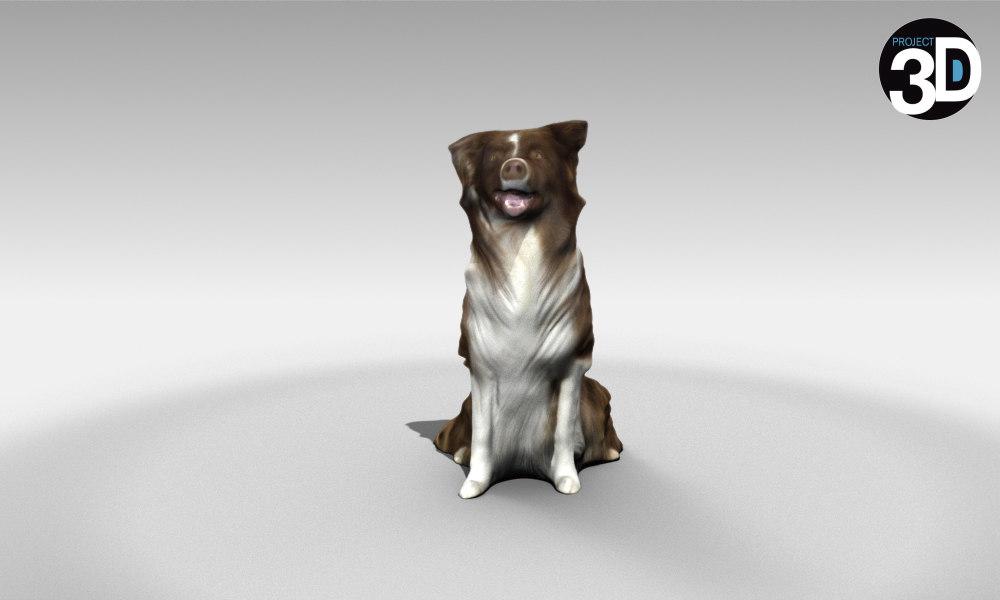scanned collie 3D model