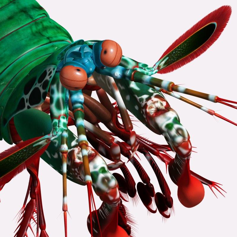 3D peacock mantis shrimp